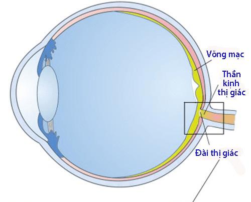 thần kinh thị giác 1