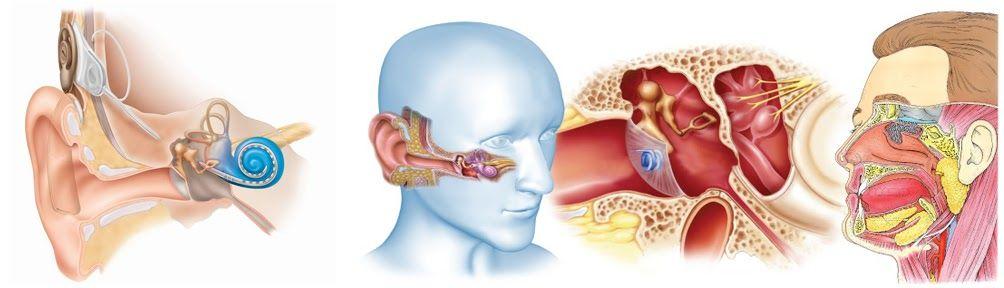 Một số bác sĩ, phòng khám tai mũi họng tốt TP.HCM