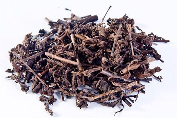 Nhân trần chứa nhiều tinh dầu, mùi thơm đặc trưng